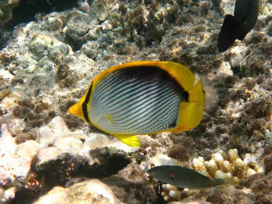 Фото подводного мира океана