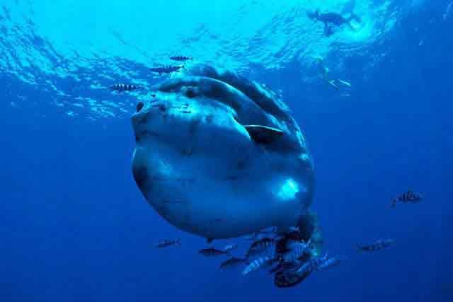 Подводный мир океана. Фото.