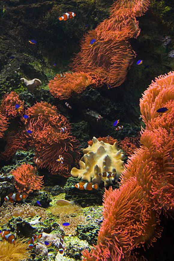 Жизнь в океане. Фото.