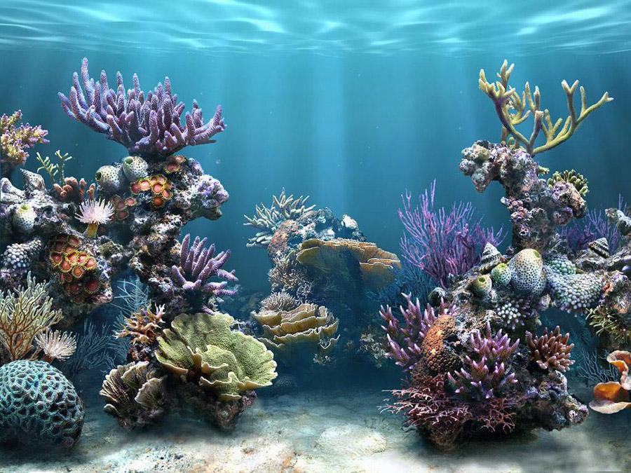 океанское дно жители видео