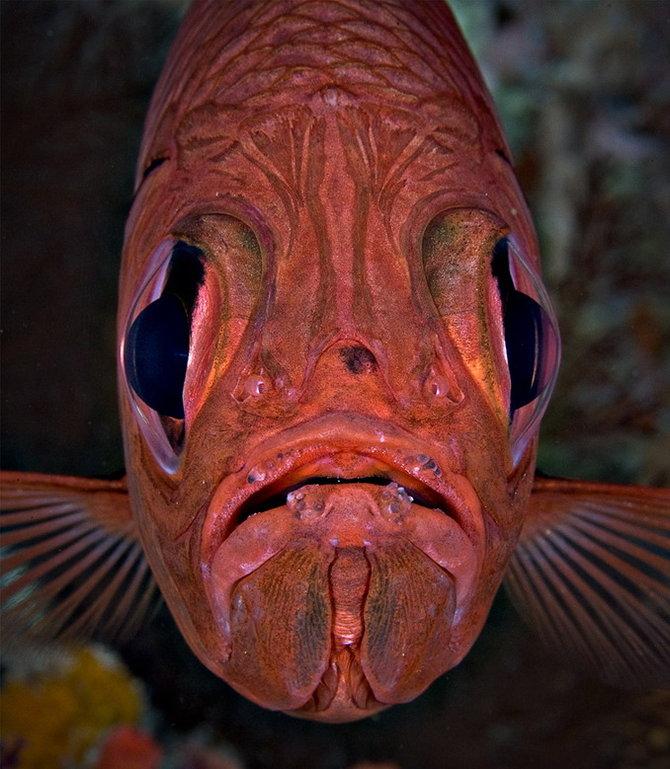 странные рыбы фото и название ребенка очень важное