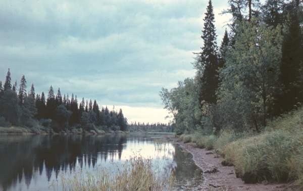 Северная Двина - река на севере России. Характеристика ...: http://webmandry.com/severnaya-dvina-reka-na-severe-rossii-harakteristika-opisanie-foto-video/