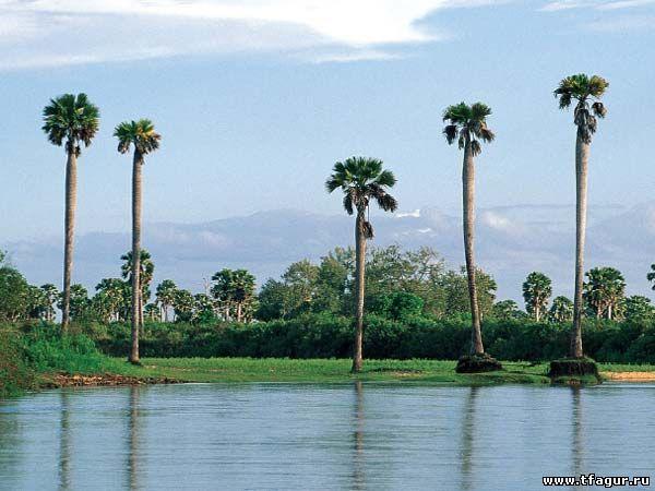 Река Руфиджи