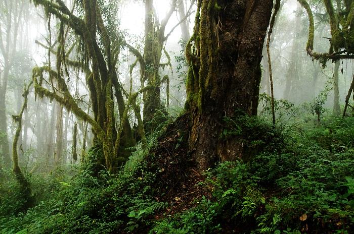 http://webmandry.com/wp-content/uploads/2013/03/2013_03_007-Welcome-To-The-Jungle_spr13.jpg