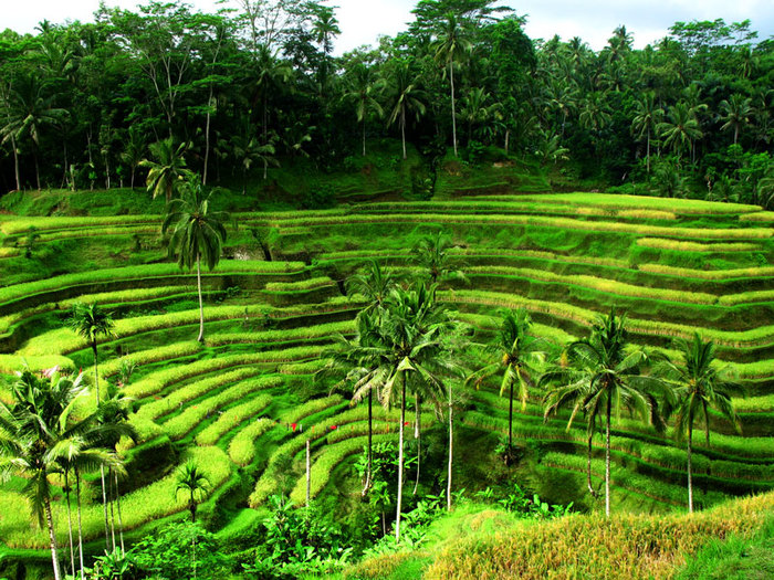 Достоянием Бали можно по праву считать его ландшафты.