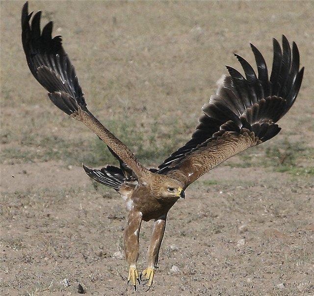 с описанием птицы мира с картинками необычные