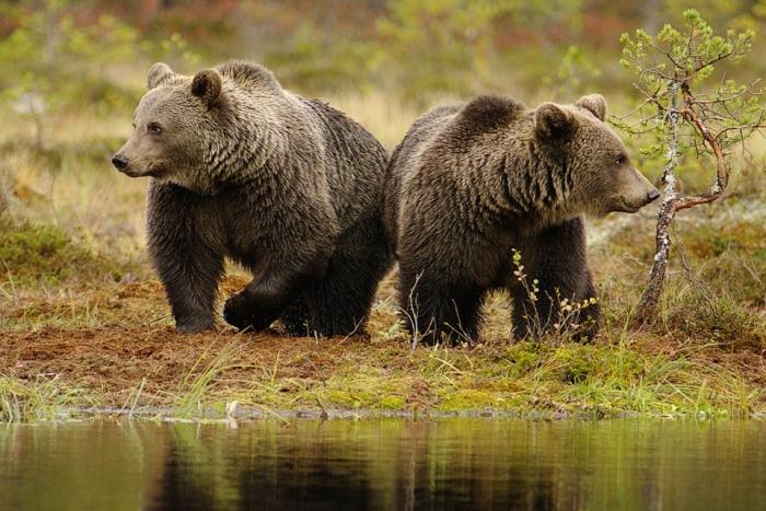 Животный и растительный мир Европы описание обитателей фото  02