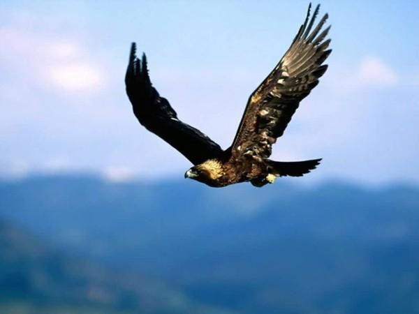 Доклад на тему орел птица 6579