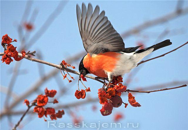 Песня белым снегом уральского народного хора