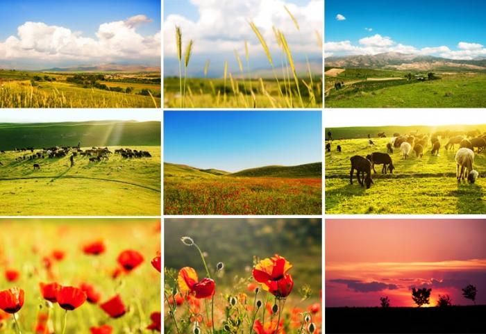 Картинки про природу растения и животные