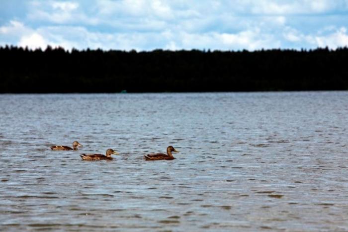 рыбалка на озере запрудня