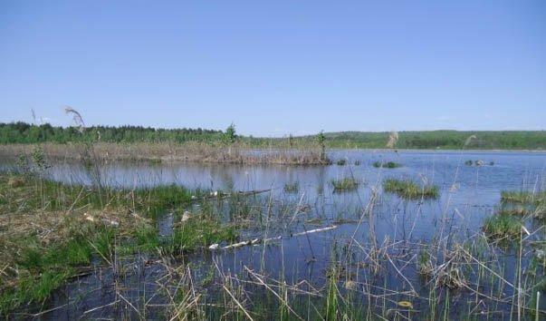 Водоемы ульяновской области реферат 3995