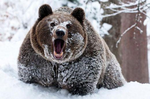 Картинки из жизни диких животных зимой