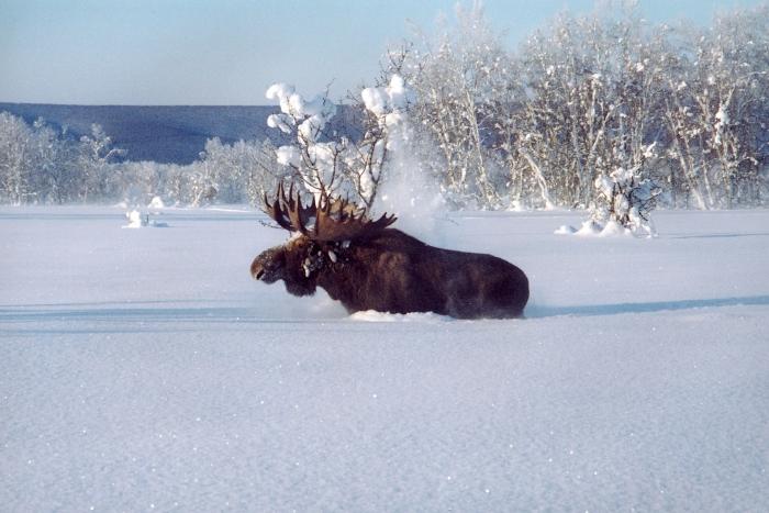Картинки о жизни животных зимой