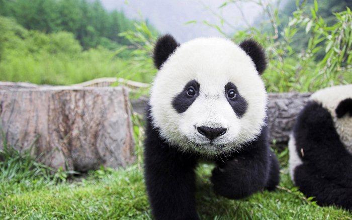 Картинки животные в дикой природе