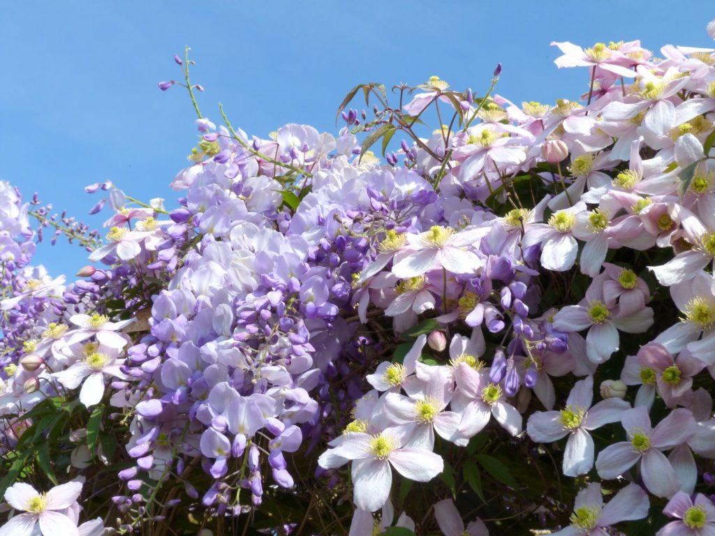 Весенний цветущий Ужгород