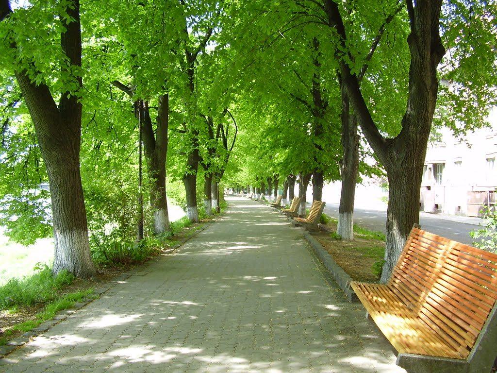 Липовая аллея в Ужгороде - лето