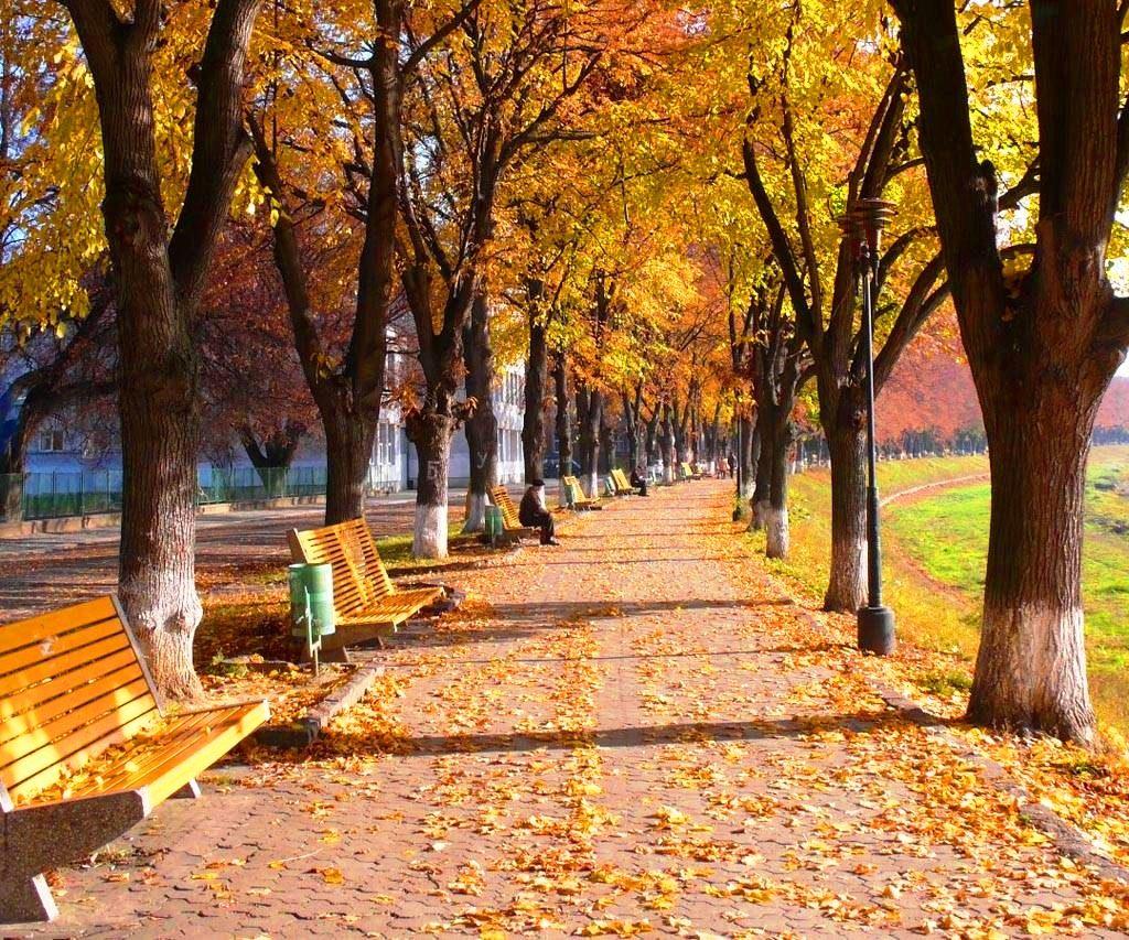 Липовая аллея в Ужгороде - осень